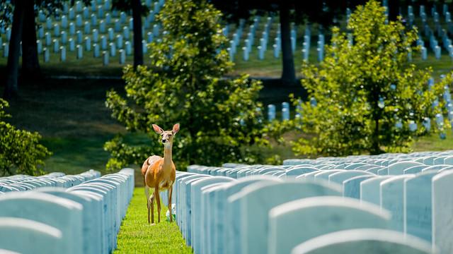 Jefferson Barracks National Cemetary summer 2017