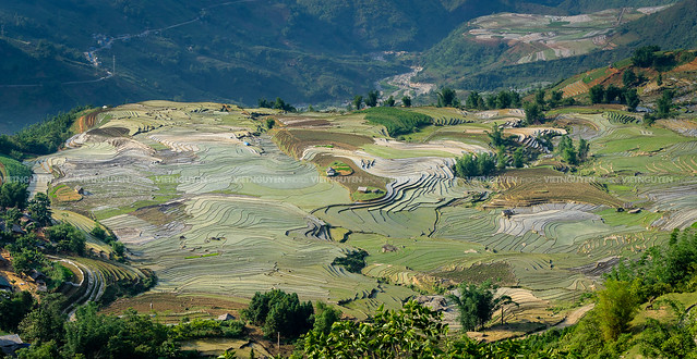Terraced paddy fields are used widely in rice