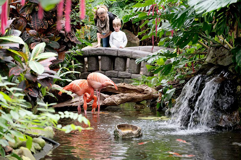 Attrayant ... BC · Victoria Butterfly Gardens, Butterfly Gardens, Brentwood Bay,  Victoria, Vancouver Island, ...