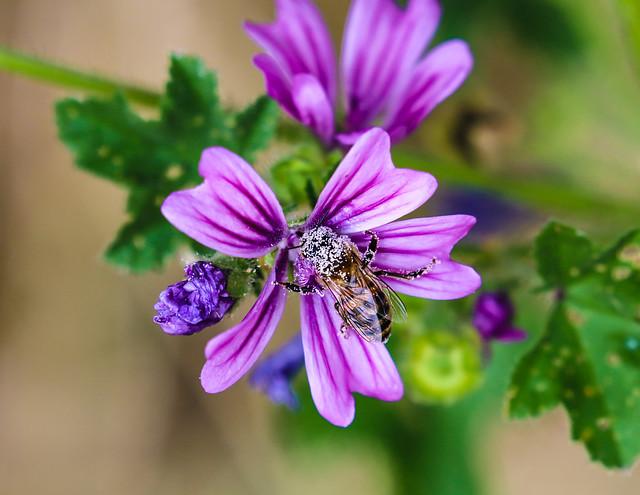 load of pollen