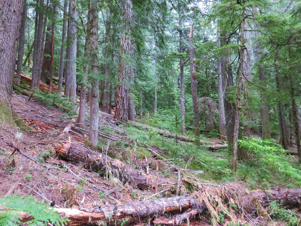 Downed trees along Linton Lake