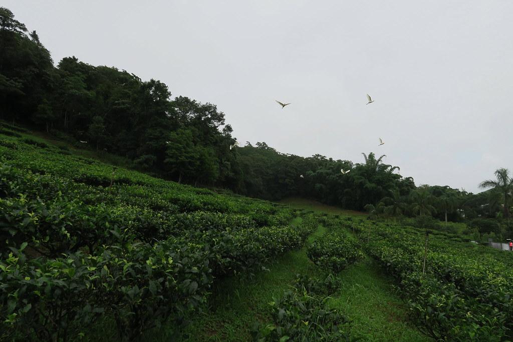 日月老茶廠 (3)