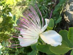 IMG_3088_Gorgeous flower