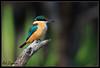 Todays Kingfisher