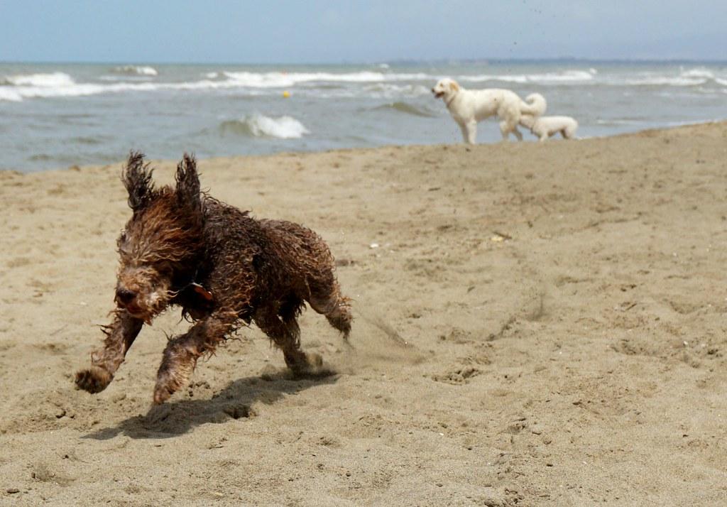 Koiranelämää rannalla