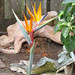 Statues and Birds of Paradise San Francisco Backyard 170628-162652 C4