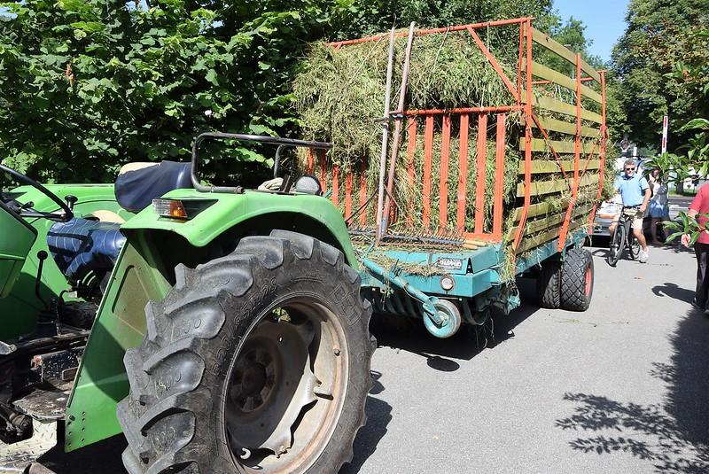 Hay harvest 08.07 (2)