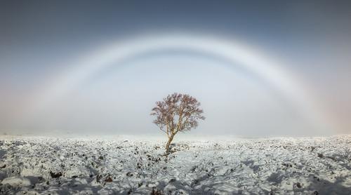 Calmer, Fogbow por Scott Robertson