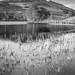 Loch Tarff-2.