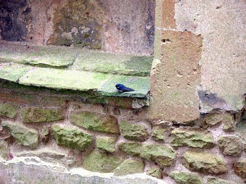 Bird Singing in Amongst the Ruin