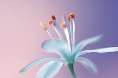 spider plant dreams