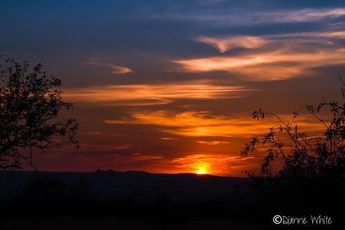 ©diannewhite nikond7200 sahuarita arizona sonorandesert sunset