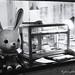 Biscuit Rabbit