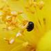 bug1 by gchurch44