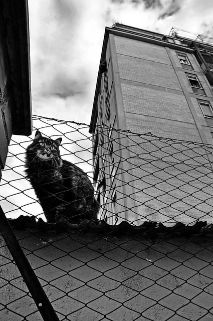 Animals & the city V, Nikon D90, AF-S DX Zoom-Nikkor 18-70mm f/3.5-4.5G IF-ED