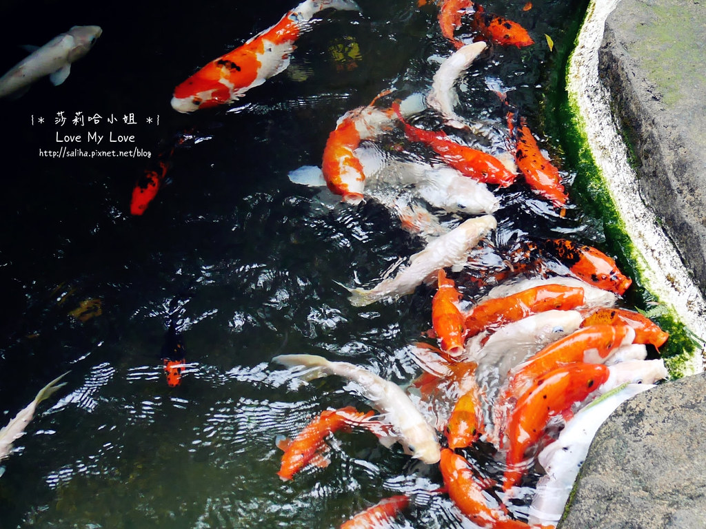 台北大安區公館新生南路附近餐廳推薦紫藤廬泡茶下午茶 (27)