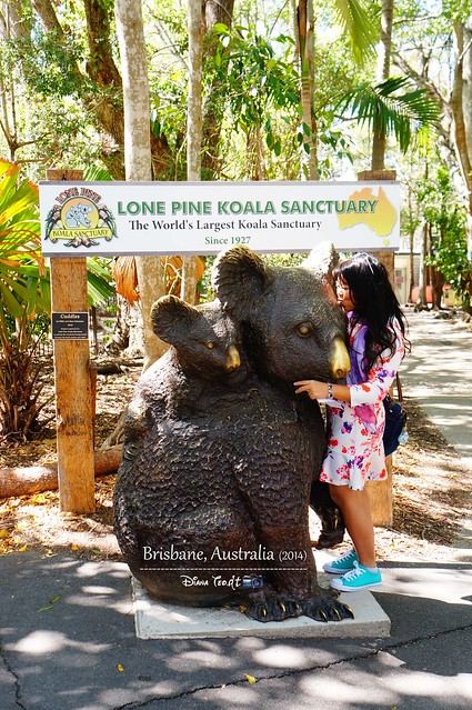 Day 6 - Lone Pine Koala Sanctuary 01