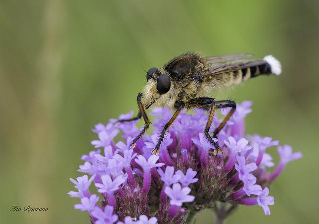 No se que insecto, Canon EOS 5D MARK IV, Sigma APO Macro 150mm f/2.8 EX DG HSM