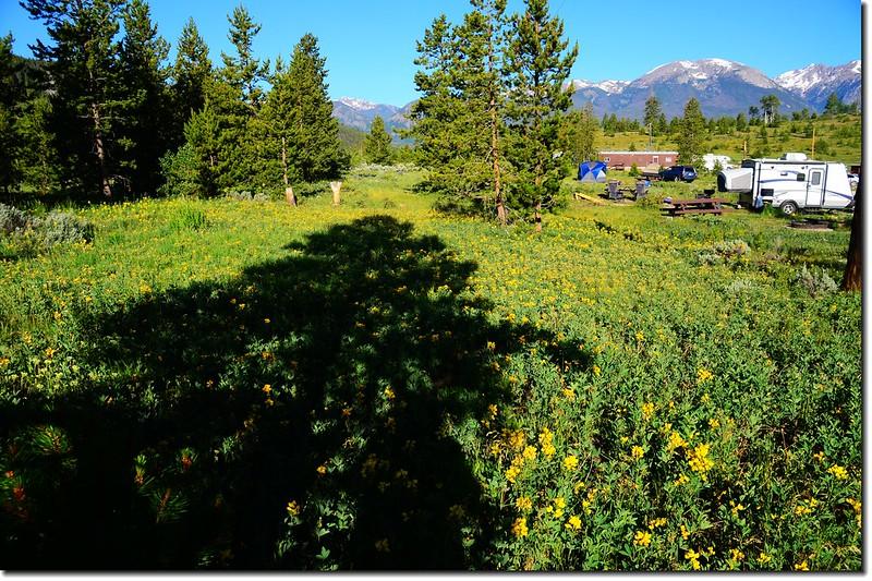 營地野花 2