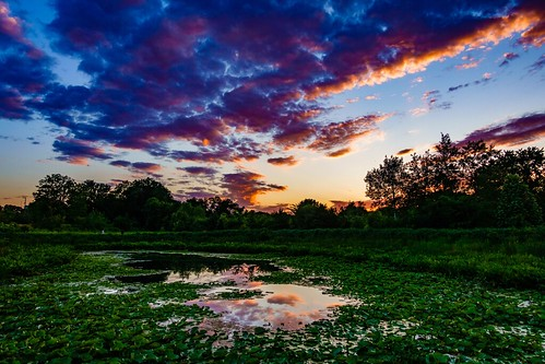 sunset lilypond alewifebrookreservation reflection cambridge clouds colors boston massachusetts sky colorful newengland water arlington