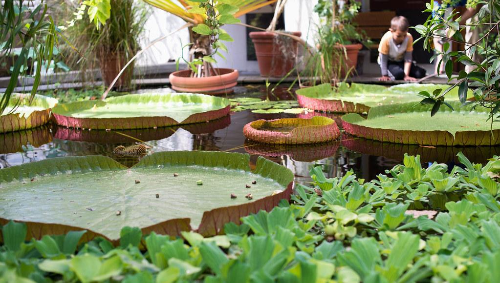 botanisk hage 01