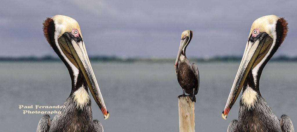 Florida Aa Satellite Beach Fl  Usa