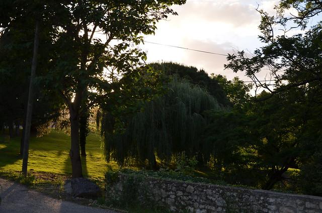 Ciel du soir dans les arbres