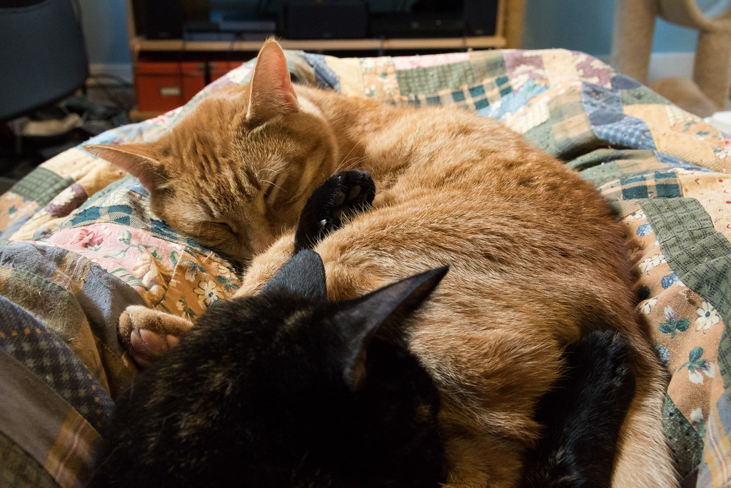 Our cat Trixie sleeps with her arms wrapped around our cat Sam