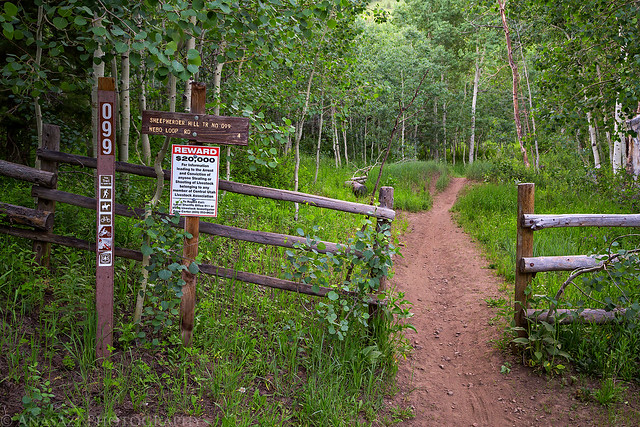 Sheepherder Hill Trail
