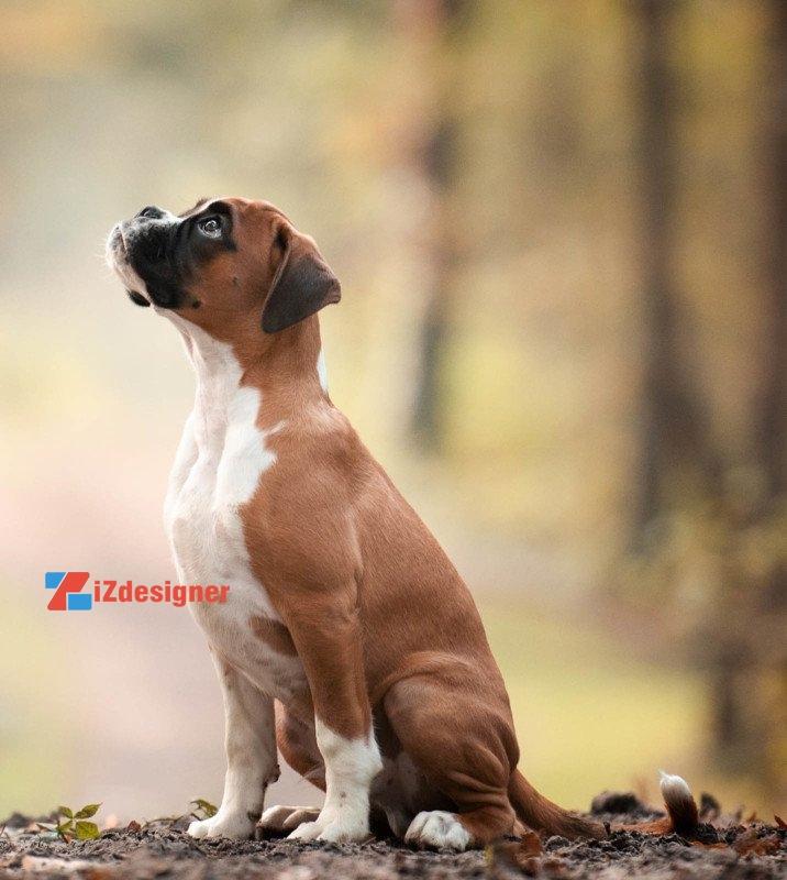 Top hình ảnh đẹp nhất về chó trong cuộc thi Dog Photography 2017