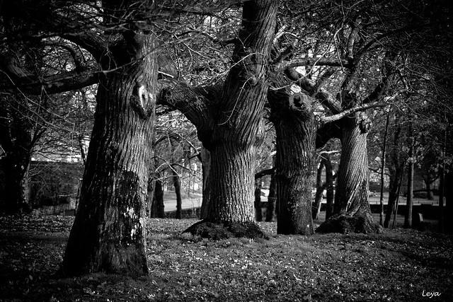 les arbres étranges