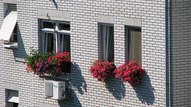 flower windows. cvetni prozori, Canon POWERSHOT S5 IS