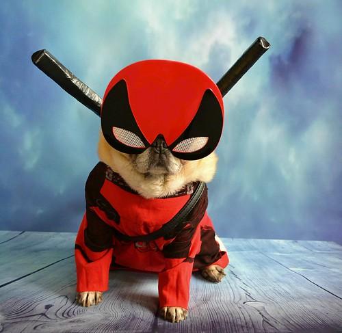 'Pugpool' Deadpool Dog Sidekick