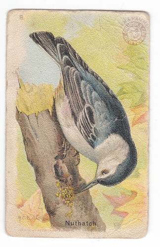 White-breasted Nuthatch Arm and Hammer Bird Trading Cards: 1915-1918