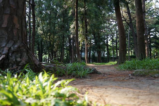 興大黑森林, Sony NEX-5T, Sigma 19mm F2.8 [EX] DN