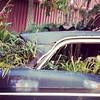 """Green"" car, 6/11/17"