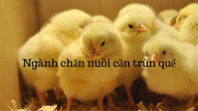 nhung-benh-can-de-phong-cho-trun-que-khi-nuoi-trun-que-kimgiatrang-com