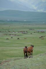 Kazakh Corner Route-5235