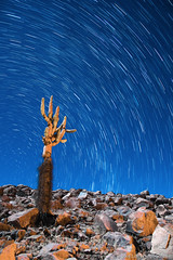 star trail cactus-3