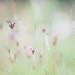 Melitaea phoebe by stephan_amm