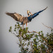 Heron Tree Top Landing