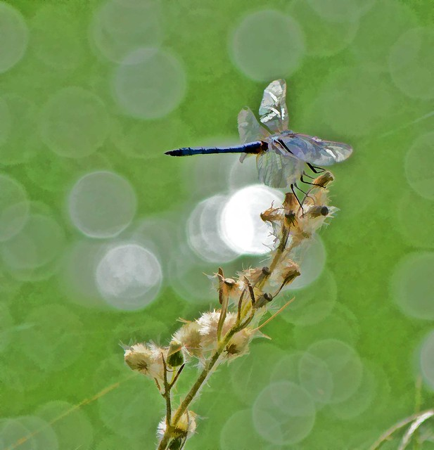 MAY YOU TOUCH DRAGONFLIES AND STARS, DANCE WITH FAIRIES AND TALK TO THE MOON