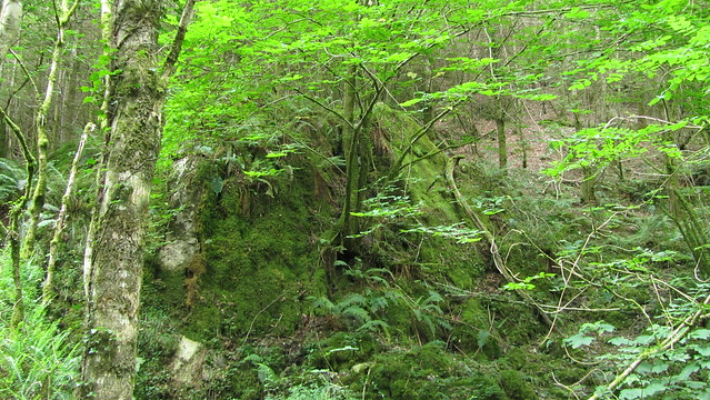 Outcrop on the other side of Beadon Brook