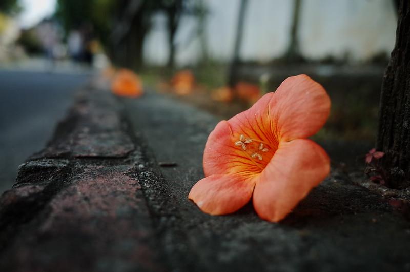 鮮やかな落花