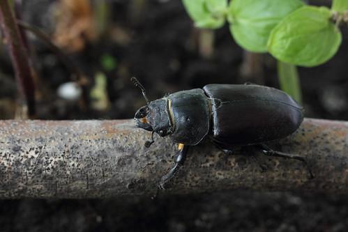 insect animal macroextensiontube macro ef50mmf18stm