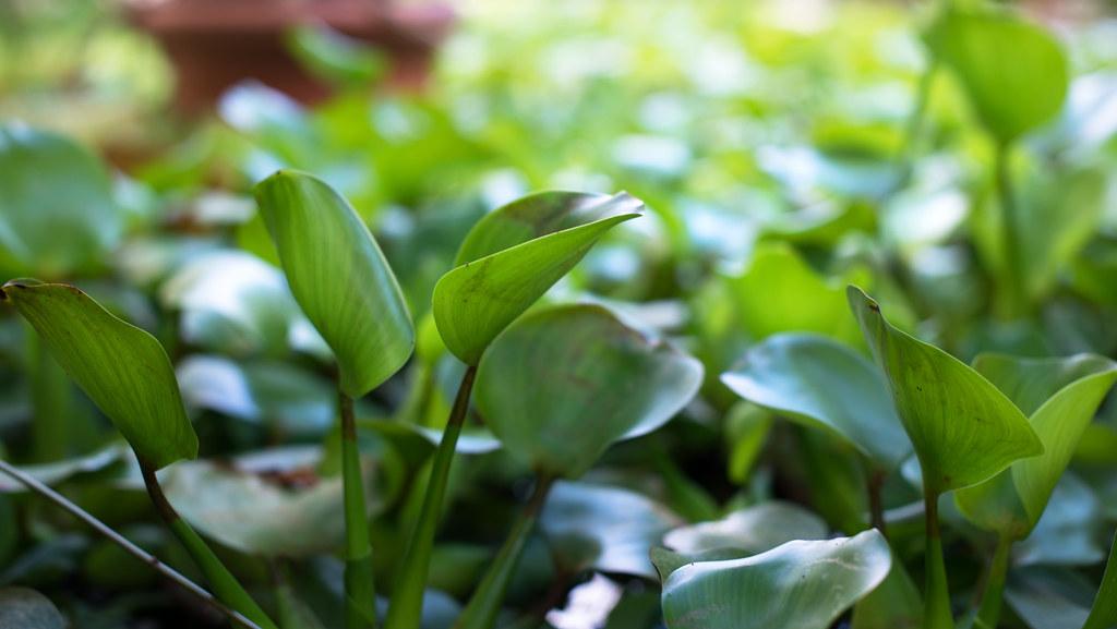 botanisk hage 03