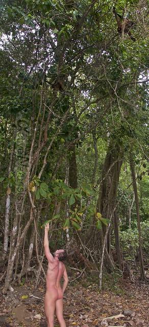 naturist 0018 Corcovado, Costa Rica
