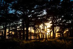 Land's End Evening, San Francisco