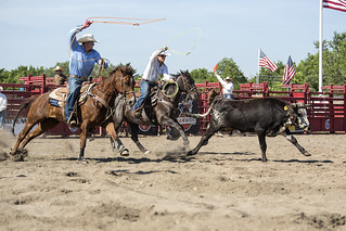 Cow Roping | by William_Doyle