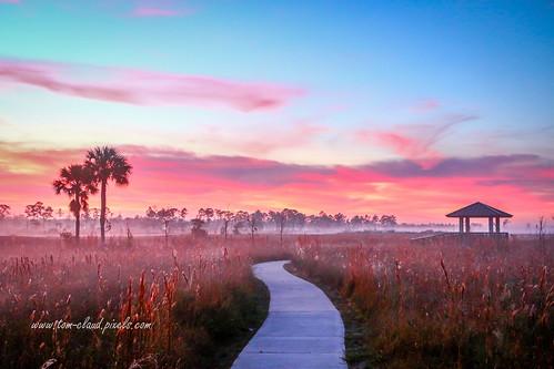 trail sidewalk observation deck observationdeck fog foggy morning weather nature mothernature landscape pineglades naturalarea pinegladesnaturalarea jupiter florida usa